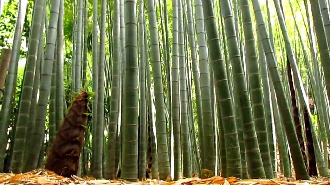 forever bambu